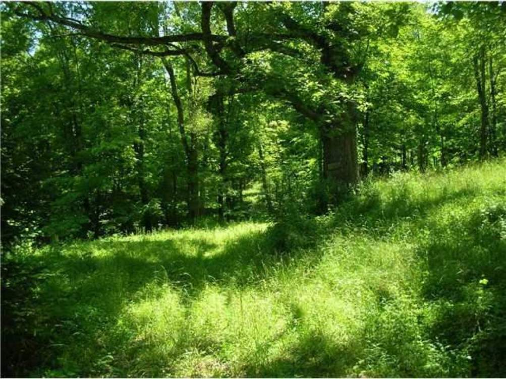0 Pleasant Valley Road- Hopewell- Ohio 43746, ,Land/farm,For Sale,Pleasant Valley,212032984