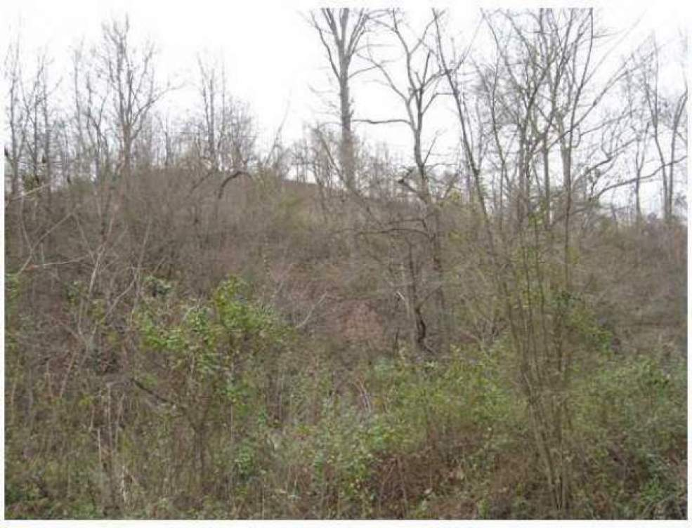 0 Dewitt Run Road- Long Bottom- Ohio 45743, ,Land/farm,For Sale,Dewitt Run,212004354